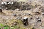 Defrisarea terenurilor degradate