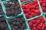 Стартира Записване за ягоди,  малинй,  капинй,  боровинкй