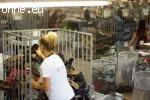 Набиране на работници за Германия - Франкфурт